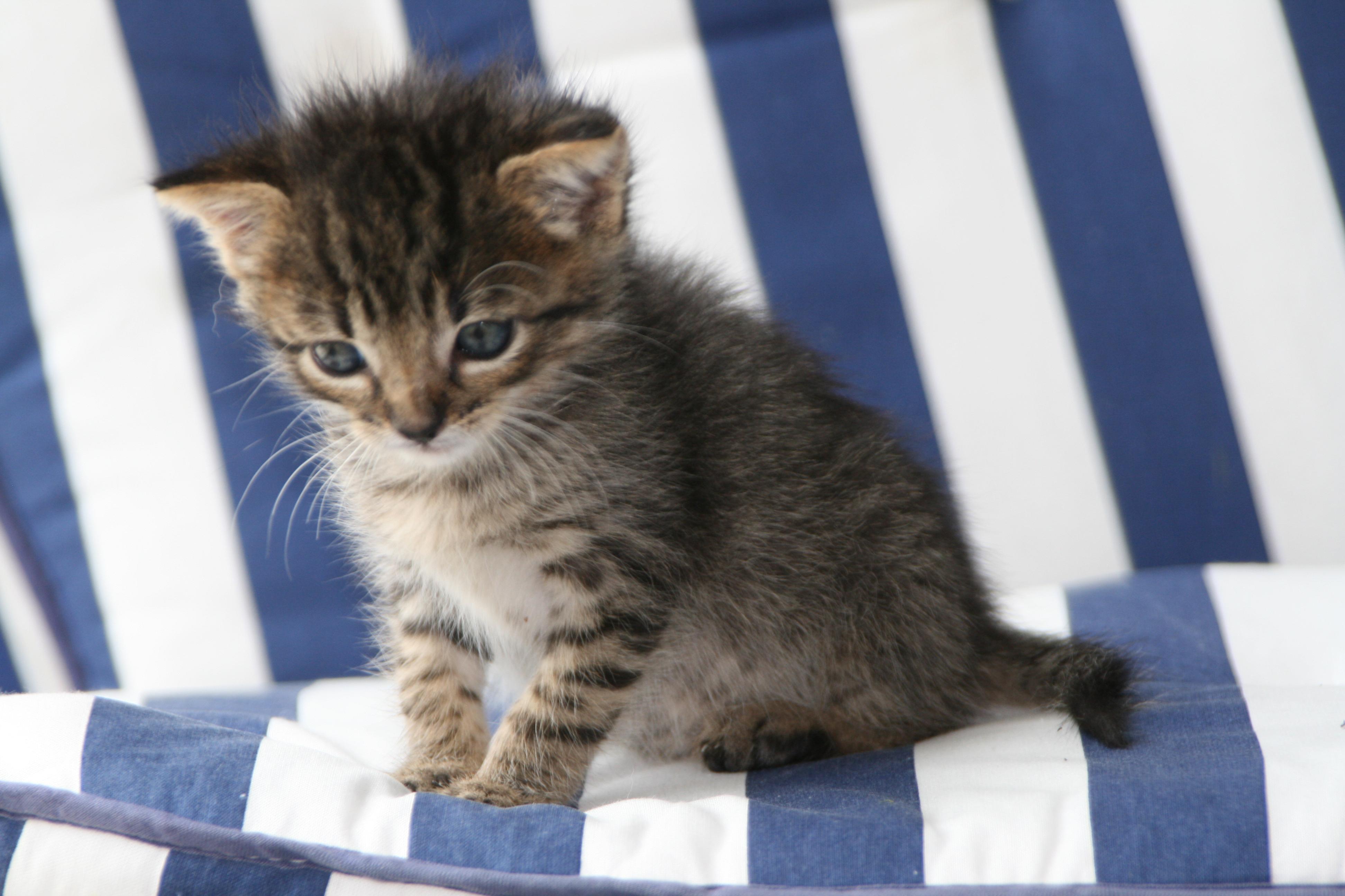 katzenarten und katzenrassen