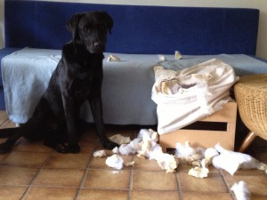 Tierhalterhaftpflichtversicherungen
