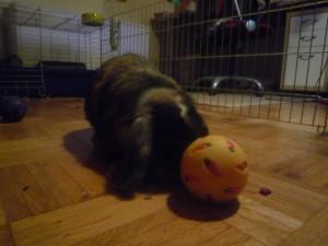 Kaninchenfitness