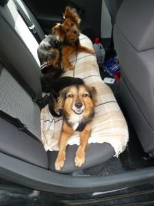 Lilly und Lunka beim Autofahren