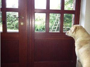 Hund und Besuch