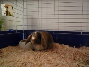 Kaninchenbub