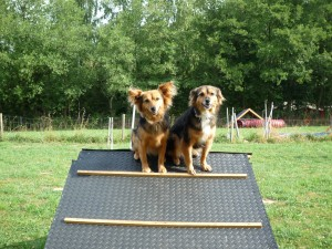 Ulaub im Hundehotel
