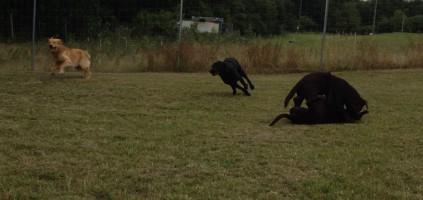 Hundespielstunde