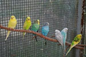 Vogelnamen