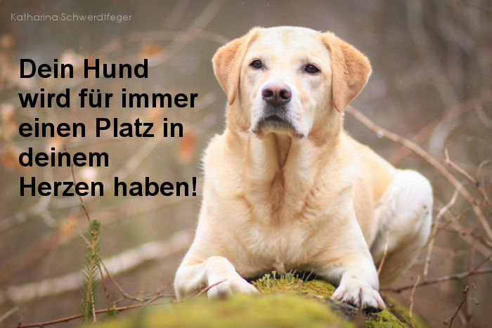 Dein Hund wird immer einen Platz in deinem Herzen haben
