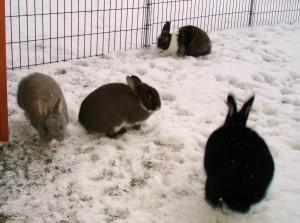 Kaninchennamen