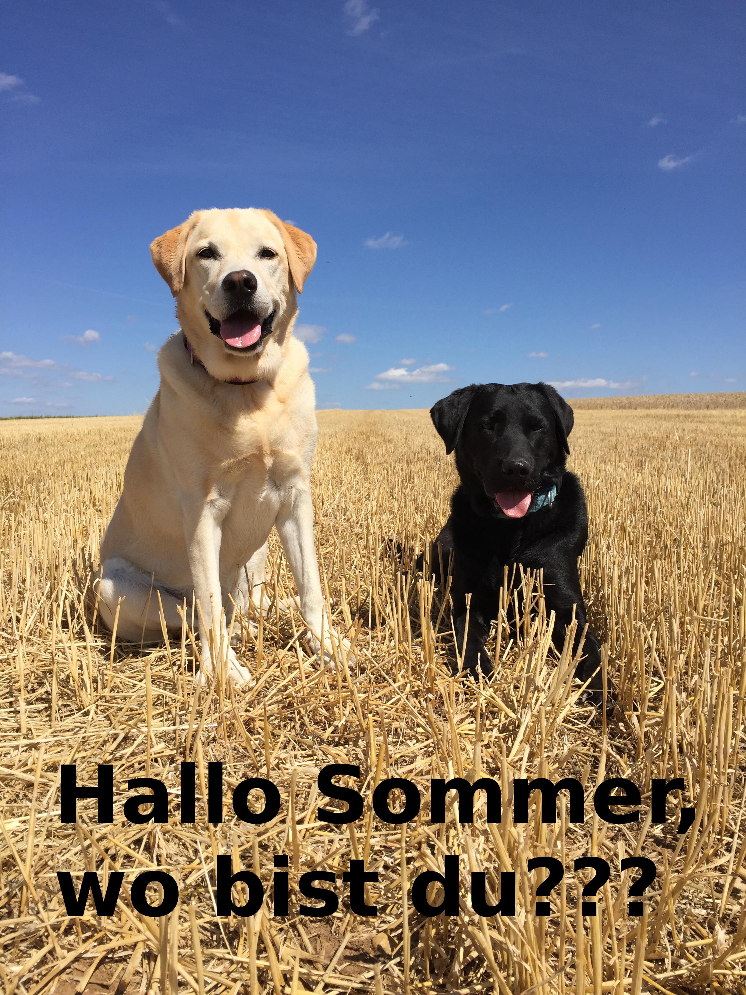 Hallo Sommer...