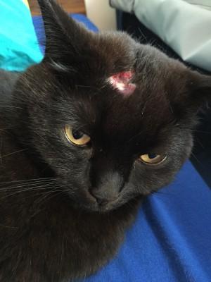 Katzenprügeleien