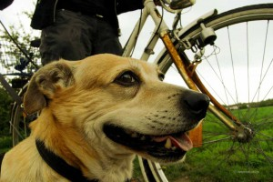© ESCCAP Deutschland e.V.; Abbildung Hund: © vetproduction GmbH