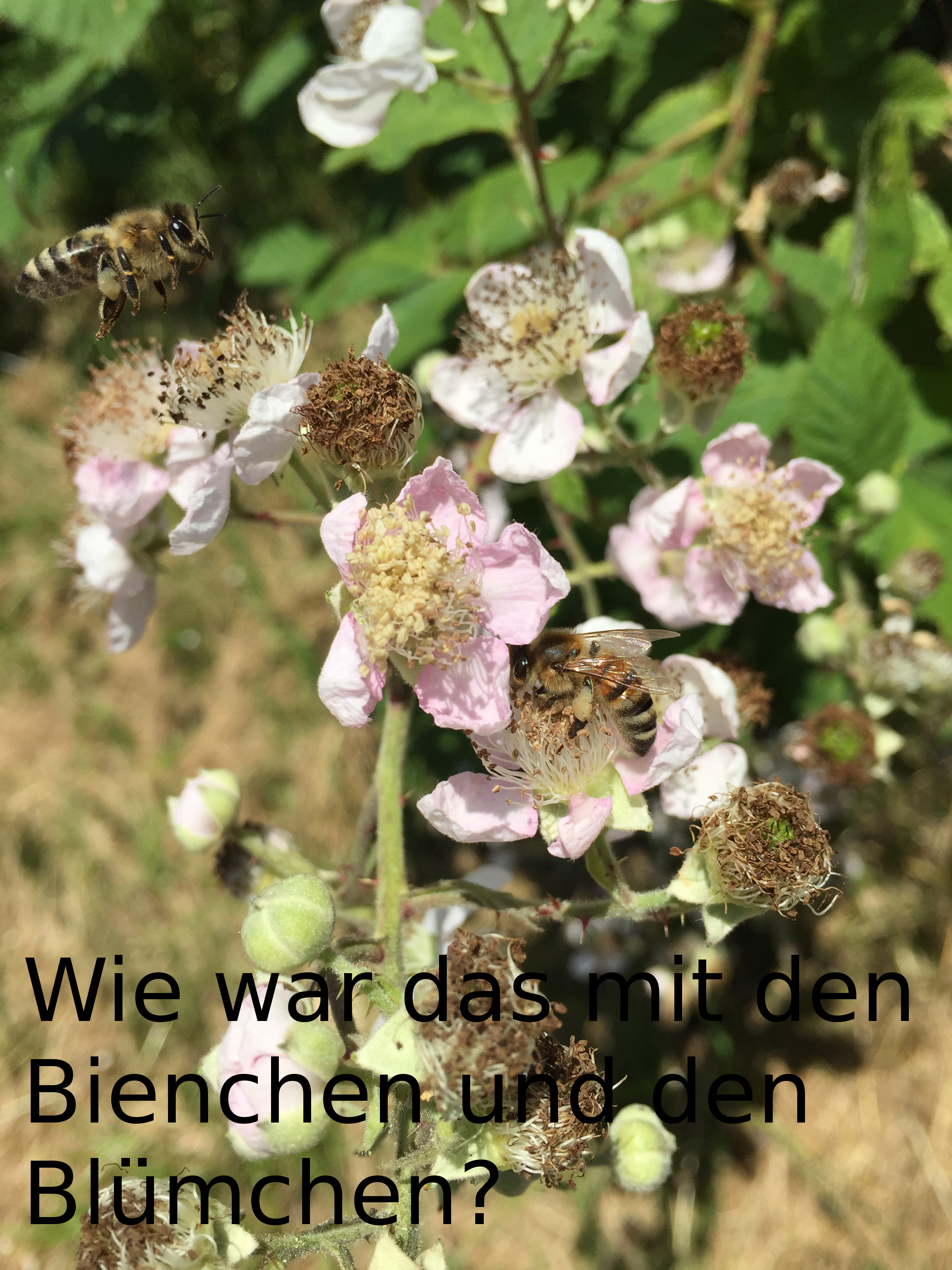 bienchen