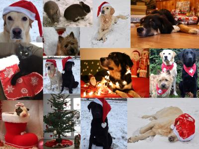 Der-Tierblog wünscht ein frohes Fest!
