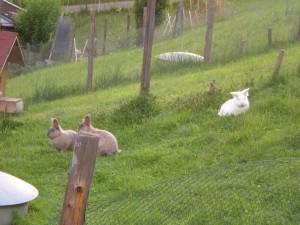 kaninchen-auslauf