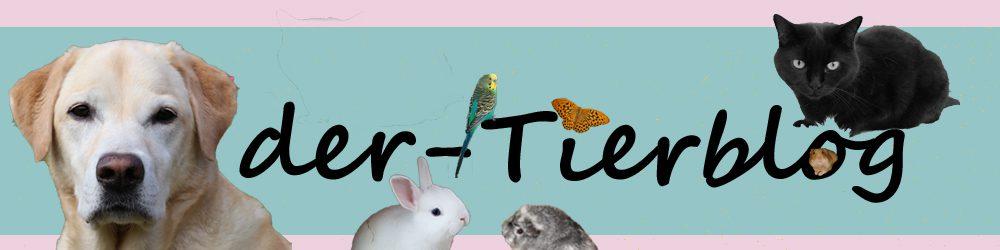 Kaninchennamen Der Tierblog